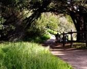 Woodland Walk Photo Card