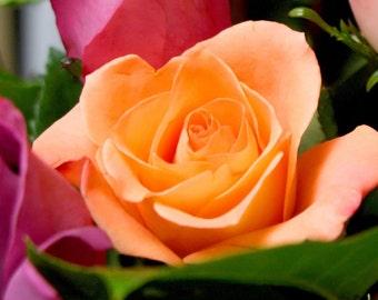 Roses Photo Art Card