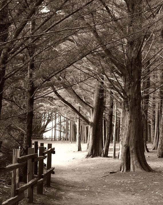 Sepia Woods Photo Print