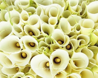 Crowded Paradise - Calla Lily Exotic Cremy wedding decoration nursery wall winter christmas gift idea Fine Art Print 16x16 Limited 1/50