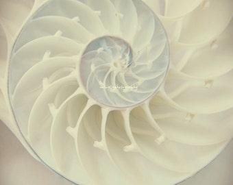 Ocean Dreaming - Nautilus Shell Ocean treasury Beach treasury Ocean is calling Beach bum Love ocean for her  Beach house Fine Art  Print