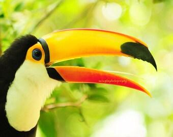 Hi there - Excotic bird, tropic, travel, forest, green, yellow, natural beauty, birder, bird watching, watching birds, Fine Art Print 8x8
