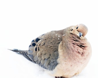 Snowflakes on Mourning Dove - Mourning Dove In Snow with REAL SNOWFLAKES On Snowig Snowy Winter decor Nature beauty Fine Art Print 8x8