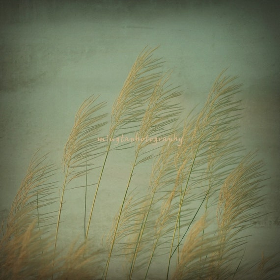 Oh Autumn - Saccharum Grass autumn acolor harvest back to school wall decor nursery decal breeze gift for her for him color photography