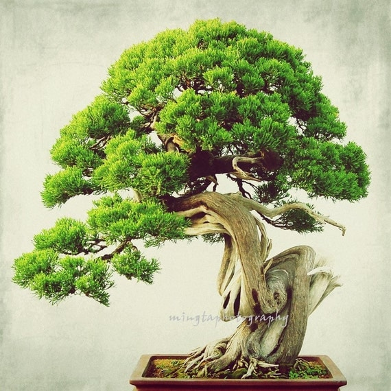 Items Similar To Bonsai 2 Exotic Spring Decor Penzai
