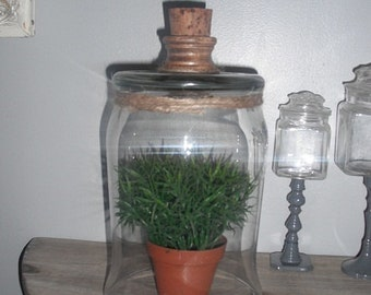 upcycled cloche with wood and cork knob ... large rustic chic dome Terrarium