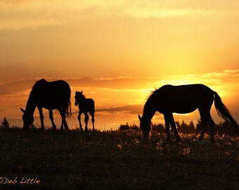 Pryor Sunrise - Wild Horses - Fine Art Print