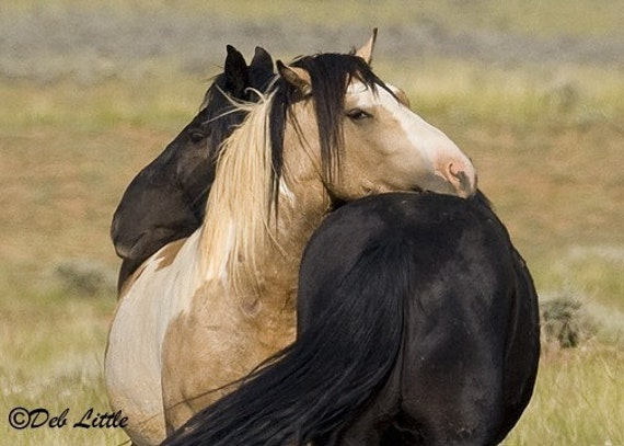 Lean On Me - Wild Horses - Fine Art Photograph
