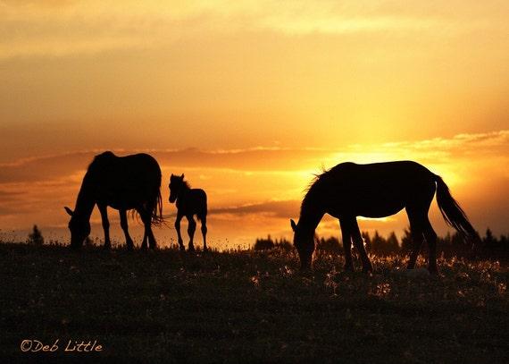 Pryor Sunrise - Wild Horses - Fine Art Print
