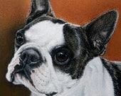 Boston Terrier Dog Art Giclee by Roby Baer PSA