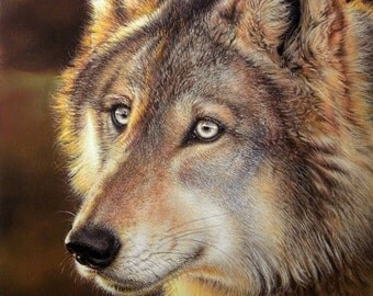 Timber Wolf Giclee Print Wildlife Art by Roby Baer PSA