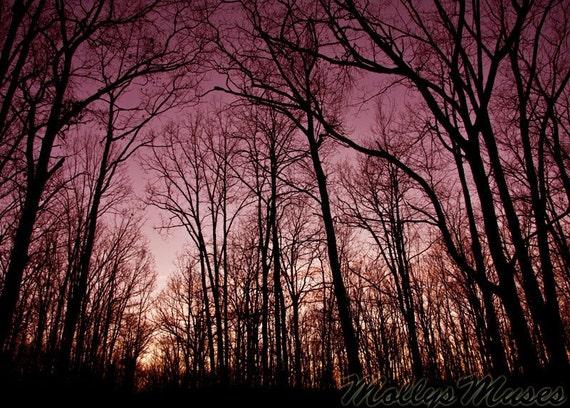 Landscape Photo, Night Sky Landscape Art Print, Forest Photograph,  Black Purple Decor, Surreal Woodland Art, Tree Art Print, Romantic Art,