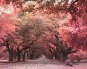 Nature Photography, Autumn Fall Trees, Surreal Nature Oak Trees, South Carolina Autumn Oak Trees, Red Fall Nature Photograph, Tree Landscape
