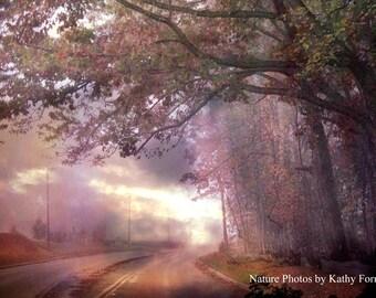 Nature Photography, Autumn Nature Tree Landscape Print, South Carolina Nature Trees Wall Art, Serene Peaceful Road, Nature Trees Photography