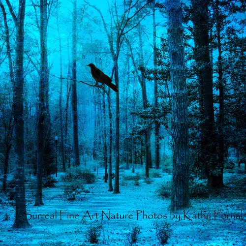 blue moon photography the woodlands - photo #36