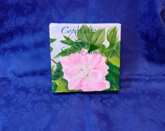 Confederate Rose-oil painting by Sharon James 6 inches by 6 inches