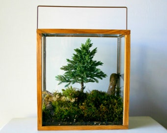Table Top Forest Terrarium