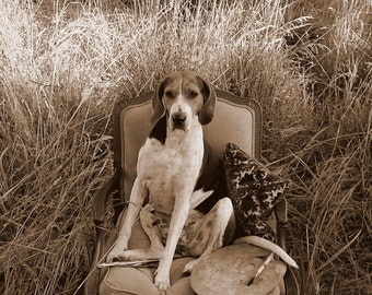 Dog Portrait - Sepia Photography Print