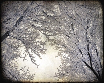 "Creamy white winter woodland snow tree branches ice forest nature surreal sepia  - ""Winter Canopy"" 8 x 10"
