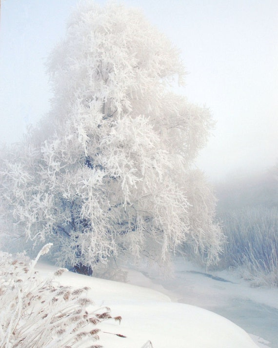 "Icy blue tree  frozen woodland frost winter  forest  pale landscape nature snow pastel  - ""Winter White""8 x 10"
