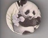 BEAUTIFUL PANDA BEAR - PINBACK BUTTON 2 1/4 INCH