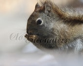 Little Red - Photography Portrait Red Squirrel Home Decor Wall Art for Kids Room Baby Nursery Decor