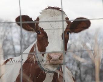 Cow Eyes - Fine Art Photography Print - Farm Animal Home Decor Wall Art for Kids Room Baby Nursery