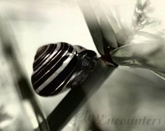 Petite Escargot - Tiny Garden Snail Sepia Black and White 10x8 - Macro Fine Art Photograph Print - Home Decor Wall Art