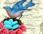 Bluebird Nest French Digital Collage Sheet image transfer Cottage Roses greeting cards burlap feed sacks birdnest eggs UPrint 300jpg