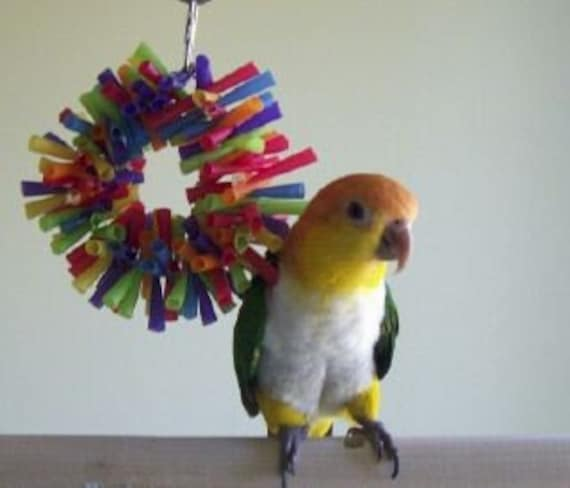 Small Toy Parrots : Small bird toy sm silly sid straw wreath shreddable