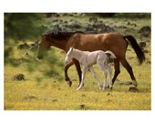 Wild Horse KBWHS11 16x20 Photo Print