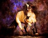 Equus - Fine Art Print