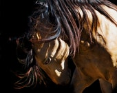 The Bold One - Equine Portrait