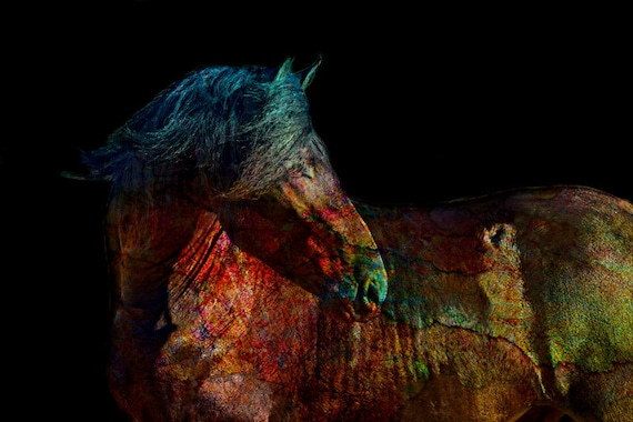 Colorful Modern Equine Art