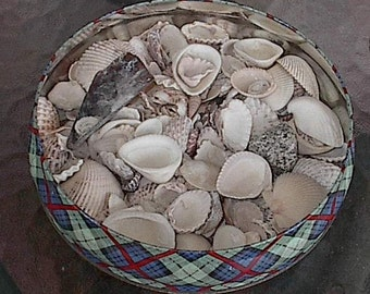 Vintage Tin of Shells