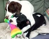 JUMBO - DOUBLE SQUEAKER - Dog Bone Toy - many colors