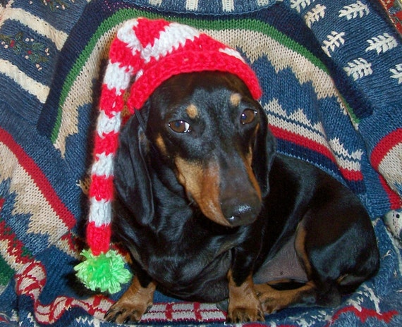 CHRISTMAS DRAMA STOCKING pet hat - 2 to 20 lbs - see other sizes avail