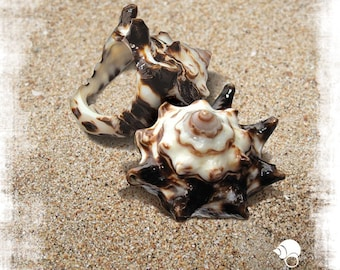 Natural Seashell Ring