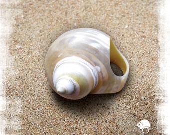 White Seashell Ring