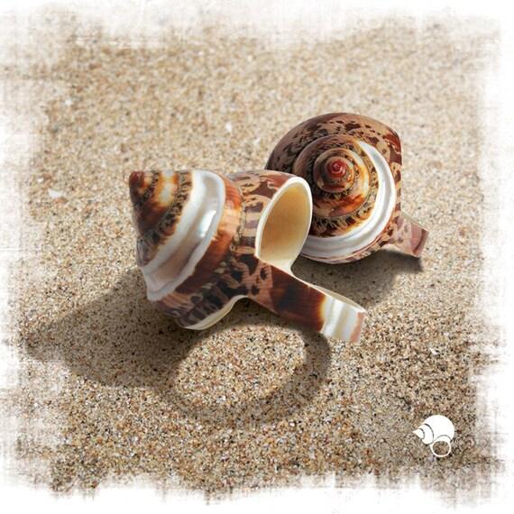 Maroon Seashell Ring