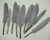 20 PCS Gray Goose Feathers