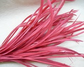 12 PCS WATERMELON RED Strung Natural Goose Biot Feathers.