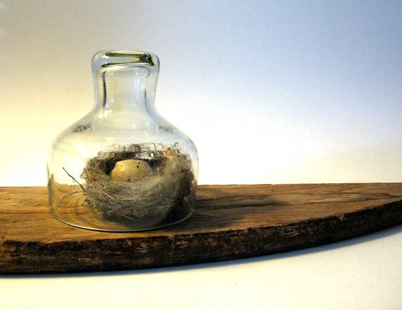 Small Glass Dome Cloche Bell Jar Display Collections