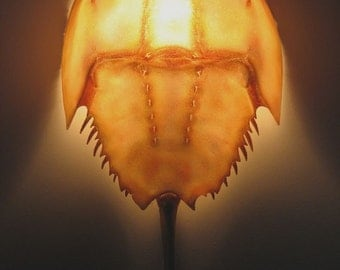 Horseshoe Crab Wall Sconce Lamp