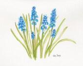 Grape Hyacinths muscari original watercolor painting fine art spring flowers