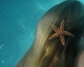 Medium sugar starfish barrette