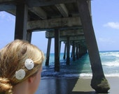 Two small sand dollar barrettes