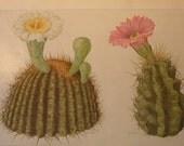 Vintage Print - Flower Lithographs - vibrant color prints from National Geographic - 1917 originals
