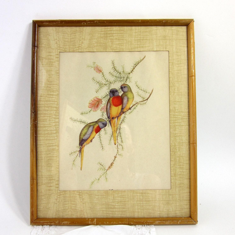 Vintage Framed J Gould Parakeet Prints