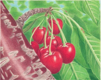 Tempting Cherries in My Tree Colored Pencil Drawing Print